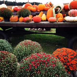 Happy Fall Y'all.....
