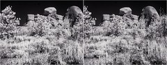 Infrared Medbow (turbguy - pro) Tags: 3d crosseye stereo infrared bw medicinebownationalforest