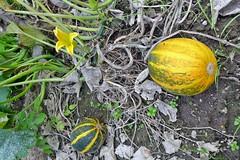 Früchte und Samen in der Natur (mama knipst!) Tags: früchte fruits samen seeds natur nature oktober herbst autumn