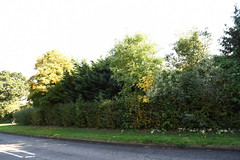 DSC_1886 (PeaTJay) Tags: nikond750 reading lowerearley berkshire gardens outdoors nature flora fauna plants flowers trees shrubs bushes foliage