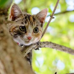 portrait (chryssiesgreece) Tags: chryssiesgreececom ellie pet kitten cat portraits