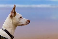 vegacasa024 (victormbv2) Tags: gijon perro