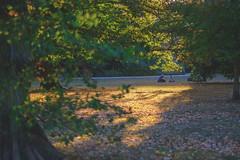 Herbstgefühle (DOKTOR WAUMIAU) Tags: ishootraw fuji fujifilm fujigear fujilove fujix fujixt20 lightroom xf56mmf12 xt20 treptow treptowerpark