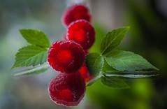 raspberries (marinachi) Tags: macromonday macro mirror remedy red green closeup tripod