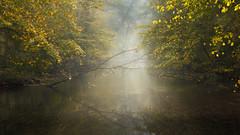 IMG_3316 (Calabrones) Tags: deutschland oberbayern bayern schlossparknymphenburg münchen herbst morgen nebel morgennebel bäume herbstlaub wasser see mignonbergeroswald