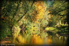 Nehalem river fall colors (Garry's lens....) Tags: river fall beauty nature outdoors colorful pretty beautiful water swimming picmonkey