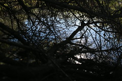 Oaks Bottom (Tony Pulokas) Tags: blur oaksbottom portland oregon winter oaksbottomwildlifepreserve bokeh reflection lake pond tree