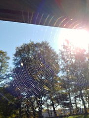 Oh what a tangled web we weave - 2018-10-15_04-34-21 (406highlander) Tags: spider web cobweb silk dundee ninewells hospital ninewellshospital tayside scotland