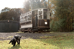 """""""Cocker and the tram"""" (WT_fan06) Tags: hull 96 heaton park tramway museum heritage vintage old retro photography nikon d3400 dslr artsy artistic aesthetic beautiful composition 7dwf flickr public transport transportation history historic"""
