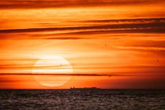 Autumn Sun Goes Down (camerue) Tags: landschaft outdoor warmefarben abend sonne meer schiff boot nordsee hervst texel niederlande sonnenuntergang