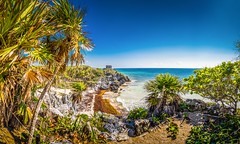 Once you've been here, everything changes. (catrall) Tags: mexico yucatan quintanaroo rivieramaya tulum beach sand palm palms palmtree palmtrees cliffs maya mayan culture archaeology paradise nikon d750 fx sigma sigmalens 24105 april 2018