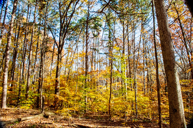 Hoosier National Forest - Hardin Ridge Recreation Area - Monroe Lake - November 7, 2018