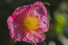 MS Bot Garten 14092018 037 (Dirk Buse) Tags: münster nordrheinwestfalen deutschland deu nrw germany botanischer garten uni flora natur nature outdoor color farbe mft m43 mu43