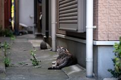 猫 (fumi*23) Tags: ilce7rm3 sony 85mm fe85mmf18 sel85f18 apsccrop a7r3 animal alley cat chat neko gato katze emount tokyo street ねこ 猫 ソニー 路地 東京