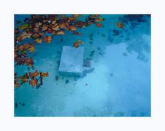 Histoires d'eau (hélène chantemerle) Tags: feuillesmortes eau boîte reflets ombres automne bleu orange deadleaves water box reflections shadows autumn blue