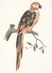 A Parrot on a Branch by Johan Teyler (1648-1709). Original from the Rijks Museum. Digitally enhanced by rawpixel. (Free Public Domain Illustrations by rawpixel) Tags: otherkeywords animal antique art artwork avian beak beautiful beauty bird branch color colorful design drawing fancy fauna feather illustrated illustration johanteyler leaf name native natural nature old one ornithology paint painting parrot perched plumage portrait retro single tail vintage wild wildlife wing