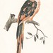 A Parrot on a Branch by Johan Teyler (1648-1709). Original from the Rijks Museum. Digitally enhanced by rawpixel.