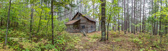 Cabin in the Forest (PIERRE LECLERC PHOTO) Tags: logcabin cabin camp remote secluded alone forest nature pineforest pinelogcabin woods landscape panorama easterntownships sherbrooke quebec canada picturesque green canon5dsr pierreleclercphotography