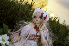 Robusta (Sugar Lokifer) Tags: dolly dream sister dollfie volks moe after school akihabara vinyl doll bjd ball jointed