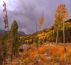 Rocky Mountain Fall Aspens (HarrySchue) Tags: colorado landscape nature rockymountains rockymtnationalpark nationalparks nikon d800e mountains fall fallcolors clouds aspens trees