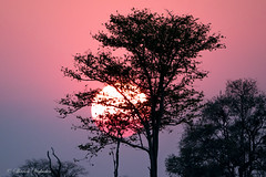Sunset in Luambe, Zambia (sharon.verkuilen) Tags: africa zambia luambe sunset sonya7rii sony safari