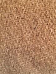 Hemp (hp349) Tags: hemp texture abstract tuesday macro