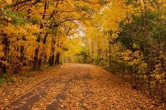 Autumn Path (mjhedge) Tags: lakeofthewoods mahomet illinois fall autumn leaves foliage yellow path park fujifilm x100t