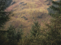 Dying Bracken - Loch Eck Sept 2018 (GOR44Photographic@Gmail.com) Tags: loch eck bracken autumn argyll cowal scotland hills trees pine loop gor44 rocks panasonic olympus g9 1240mmf28