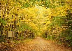 PA130081 (Child Moon) Tags: hashtag 2018topwrs awenda provincial park ontario hiking autumn fungus mushrooms leaves trails trees georgianbay waterfront