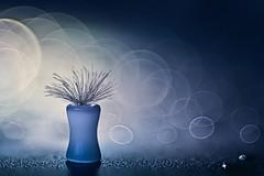 Magic flower pot (Janette Paltian) Tags: janettepaltian 6dii diaplan 100mm vintagelens altglas vintage old bubble trioplan canon soft bokeh flower pot seed autumn blue light magic projektorobjektiv