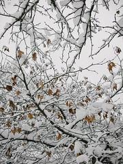 50829233 (aniaerm) Tags: snow ice frost