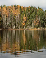 Reflecting autumn (hasor) Tags: autumn fall tree lake water reflection spruce leaf leaves orange green sweden värmland forest
