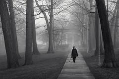 Just Walking Her Dog (JeffStewartPhotos) Tags: walk walking dogwalk walkingadog walkingherdog lady woman kewgardens thebeach thebeaches toronto ontario canada blackandwhite blackwhite bw toned walkingwithdavidw jsp5841