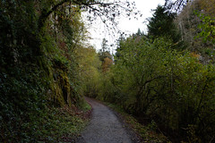 Navarra 2018 (Miguel Angel968) Tags: 2018 irati navarra otoño autumn forest bosque