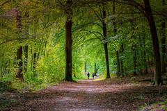 Krefeld - Hülser Berg - Waldweg (Ventura Carmona) Tags: alemania germany deutschland nrw krefeld hülserberg waldweg sendero camino pfad path way wood wald bosque venturacarmona