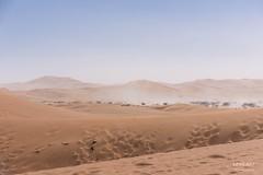 Sandsturm im Tal/ Sandstorm in the valley (LENS.ART Photographie) Tags: dünen nikon d7200 landscape dunes sturm sand sandsturm storm sandstorm flussbett tsauchab namib sossusvlei deadvlei valley tal bäume trees namibia naukluft nationalpark afrika wüste desert