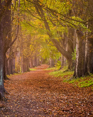 The passage of the season (Anthony P.26) Tags: bedfordshire category england flora luton places autumn fall fallcolors autumnal season trees leaves fallenleaves canon1585mm canon70d canon park citypark path lane road colours nature natural outdoor landscapephotography travelphotography