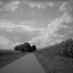 In between (Rosenthal Photography) Tags: ilfordfp4 ff120 asa125 epsonv800 landschaft mittelformat 20180902 6x6 städte schwarzweiss anderlingen strase pentaconsixtl analog ilfordlc2912920°c11min dörfer siedlungen landscape summer august mood blackandwhite road way path pathway track trail fields trees pentacon sixtl czj zeiss biometar 80mm f28 ilford fp4 fp4plus lc29 129 epson v800