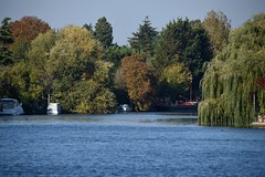Runnymede-Old Windsor 10 October 2018 010 (paul_appleyard) Tags: october 2018 river thames old windsor blue sky trees autumn fall colours colors