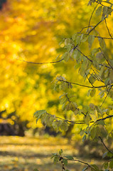 Colours of autumn (PetuPictures) Tags: visitfinland finland nature autumn green orange yellow tree trees leaf field forest bokeh boke light sun sunlight colors color pentax explore earth