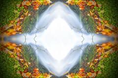 Inderø Skov ved Hald Sø 10 - Abstrakt (Walter Johannesen) Tags: hald sø morgen natur nature morning skov træ tree træer trees wood