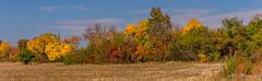 Autumn colors (Milen Mladenov) Tags: 2018 landscape panorama varbovchets autumn colors fall fallseason foliage nature season shrubs trees view