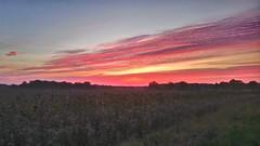 sunset in the fields / Sonnenuntergang in der Feldmark (r.stopable1) Tags: sunset sonnenuntergang feldmark fields countryside twillight dämmerung natur nature october oktober outside eschede himmel sky wolken clouds
