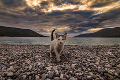A cute kitty on the beach (Vagelis Pikoulas) Tags: cat kitten kitty beach porto germeno greece sky clouds cloudy cloud cloudscape sun sunset view tokina 1628mm landscape sea seascape canon 6d