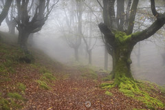 Laino artean (ManuMatas) Tags: niebla bosque verde otoño manumatas manuelmatas canon sigma 7dmark2 7dmarkii 1020