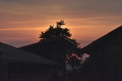 Mais häckseln - manchmal gehört auch die Nacht der Erntearbeit; Bergenhusen, Stapelholm (13) (Chironius) Tags: stapelholm bergenhusen schleswigholstein deutschland germany allemagne alemania germania германия niemcy himmel sky ciel cielo hemel небо gökyüzü wolken clouds wolke nube nuvole nuage облака sonnenuntergang sunset atardecer tramonto zonsondergang закат dämmerung dusk schemering crépuscule crepuscolo abend evening abends klinx