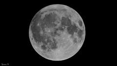 FULL - 5934 (ΨᗩSᗰIᘉᗴ HᗴᘉS +27 000 000 thx) Tags: moon lune coolpixp1000 nikon nikonp1000 p1000 night 25092018 hensyasmine namur belgium europa aaa namuroise look photo friends be wow yasminehens interest intersting eu fr greatphotographers lanamuroise