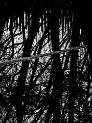 Fences and Forest (Steve Taylor (Photography)) Tags: fence forest log monochrome blackandwhite contrast stark eerie spooky water lake newzealand nz southisland canterbury trees trunk branch reflection silhouette winter