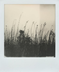 † (alex//b) Tags: 2018 polaroidsx70 polaroidoriginals schwarzweis blackwhite film instand vintage wiese meadow dark dunkel gras brennnessel stingingnettle dresden sachsen moritzburg frauenteich herbst autumn analog