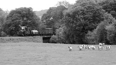 Photo of As sheep stand & watch